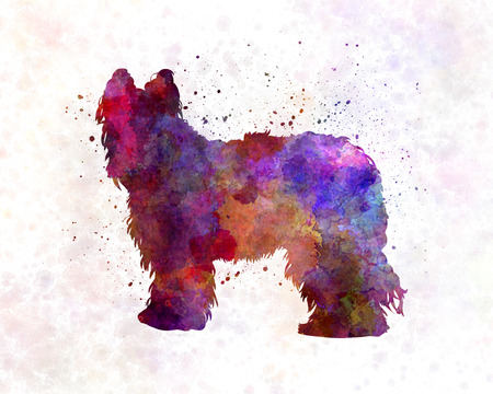 Briard in watercolor