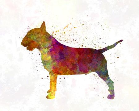 Bull Terrier in watercolor