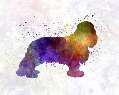 cavalier: Cavalier King Charles Spaniel in watercolor
