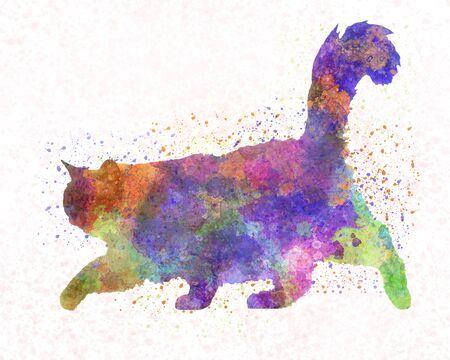 Burma cat in watercolor 스톡 콘텐츠
