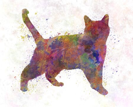 Russian  cat in watercolor