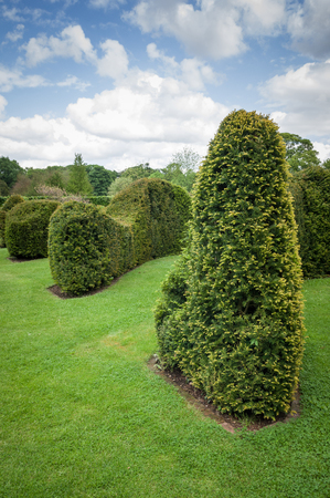 clipped: Clipped or Trimmed Hedge in a formal english garden.