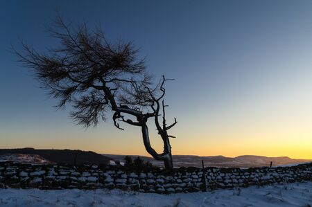 lone  tree: Lone Tree in a Winter Landscape - Roseberry Topping