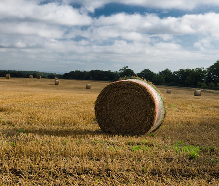 chaff: Round straw bale with netting, Straw is an agricultural by-product, the dry stalks of cereal plants, after the grain and chaff have been removed.