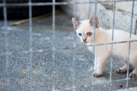 eye disease: sick street feral cat with wounded eye behind bars Stock Photo