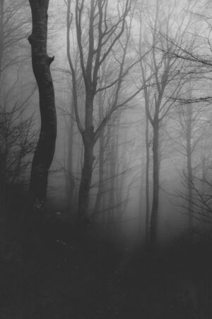 black and white photograph of a weird foggy forest Stock Photo