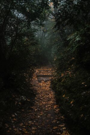 path covered with leaves going through autumn forest