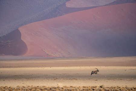 An oryx antilope in the desert of namib Stock Photo