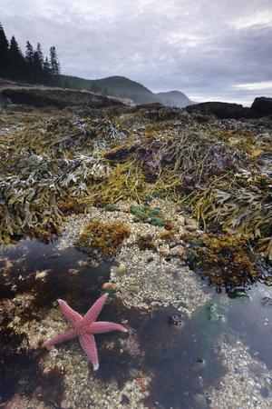 Una stella marina sulle rive del parco nazionale di Acadia, nel Maine.