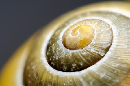 Extreme macro of a colorful snail shell photo