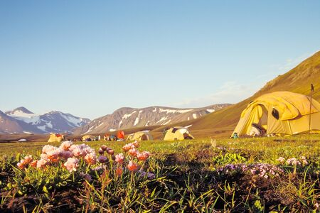 wilderness area: Campsite at Alftavatn in evening light with focus on foreground, Iceland