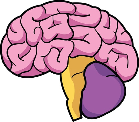A colorful cartoon depiction of a human brain.