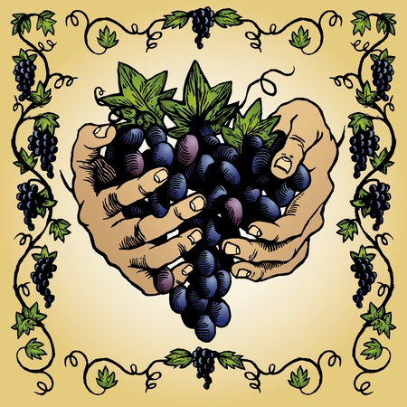 purple grapes: Grapevine Border