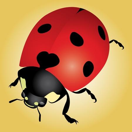 Ladybug Stock Vector - 9604544