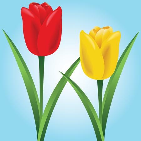 Tulips Stock Vector - 9604550