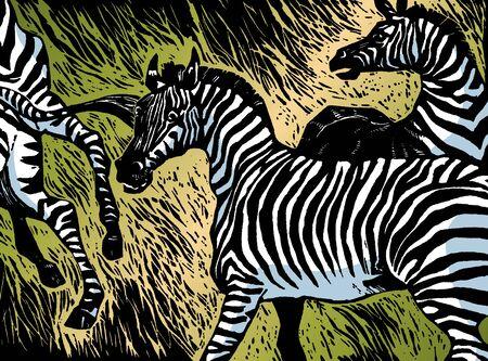тундра: Зебры