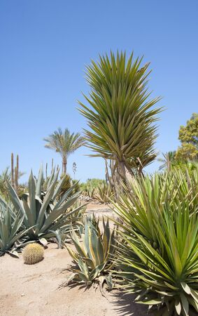 A desert garden with a variety of arid plants growing photo