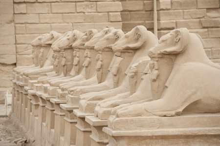 Ram headed avenue of sphinxes at Karnak Temple in Luxor photo