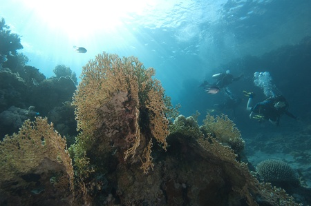 Beautiful underwater coral reef scene in the sun with scuba divers Stock Photo - 10085242