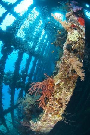 Beautiful coral scene in the sun with glassfish inside a large underwater shipwreck Standard-Bild