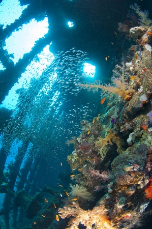 Beautiful coral scene in the sun with glassfish inside a large underwater shipwreck photo