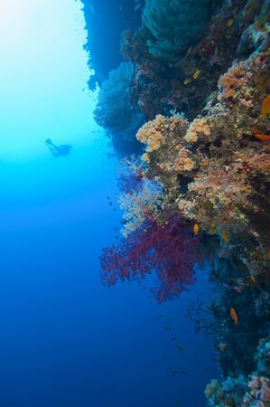 softcoral: Scuba divers exploring a stunning tropical coral reef scene Stock Photo