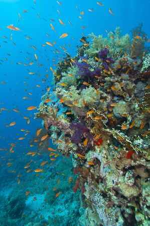 A stunning tropical coral reef scene with soft corals and fish Stock Photo - 10085368