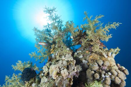 A stunning tropical coral reef scene backlit by the sun Stock Photo - 10085324