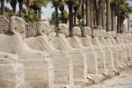 pharoah: Row of ancient sphinxes at Luxor temple in Egypt