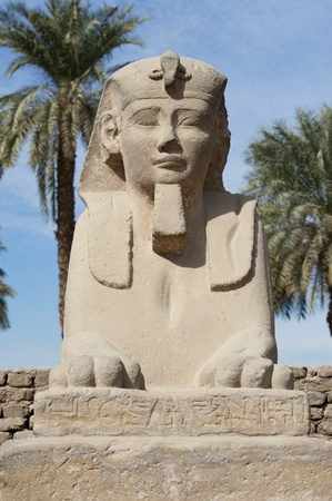 pharoah: Ancient sphinx at the entrance to Luxor temple in Egypt Stock Photo