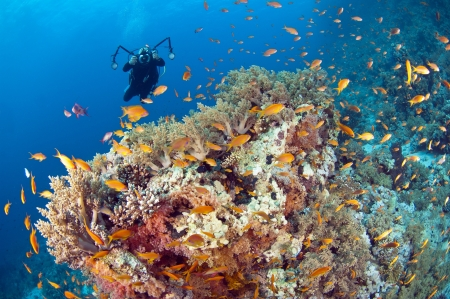 Underwater scuba diving photographer on a beautiful tropical coral reef