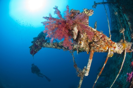 Beautiful large soft corals on an underwater shipwreck in the sun with scuba diver photo