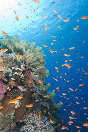 Stunning tropical coral reef scenery with shoals of fish in the sun photo