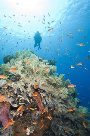 Scuba diver exploring a beautiful underwater tropical coral reef with shoals of fish photo