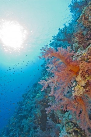 Beautiful tropical coral reef wall in the sun photo
