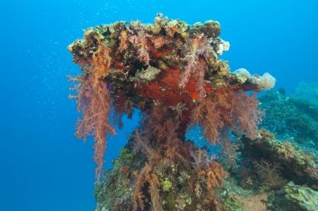 pin�culo: Los corales blandos que cuelgan de un arrecife de coral tropical pin�culo