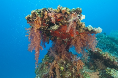 pinnacle: Soft corals hanging from a tropical coral reef pinnacle Stock Photo