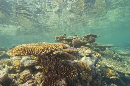 Large hard corals on a tropical coral reef just below the water surface with reflection Stock Photo - 14477164