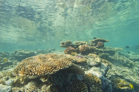 Large hard corals on a tropical coral reef just below the water surface with reflection Stock Photo - 14477146