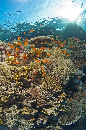 Beautiful underwater tropical coral reef scenery in the sun Stock Photo - 15328703