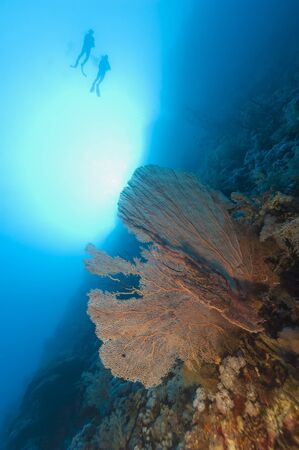 Two scuba divers exploring an underwater tropical coral reef wall with gorgonian fan in the sun photo