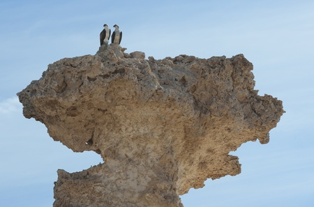 large formation: Pair of large wild osprey sea eagle birds perched high up on a desert rock formation Stock Photo