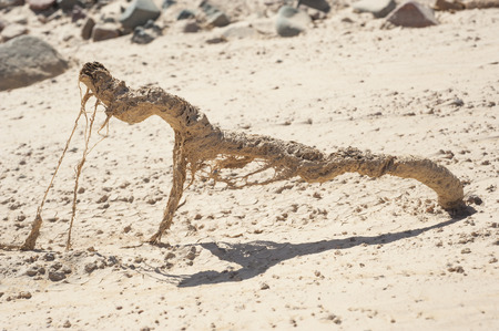harsh: Remains of small tree trunk dried up in harsh desert environment Stock Photo