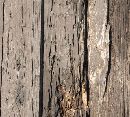 rotting: Old rotting wooden planks with woodworm creating abstract background wallpaper