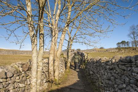두서없는: People rambling walking on footpath between dry stone walls in the english countryside rural landscape 스톡 사진