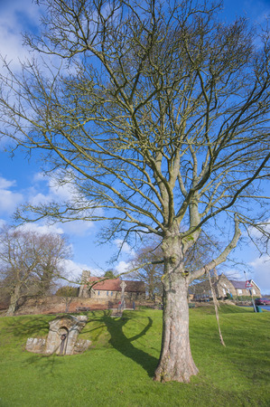 rural countryside: Large tree in park area green of rural countryside english village