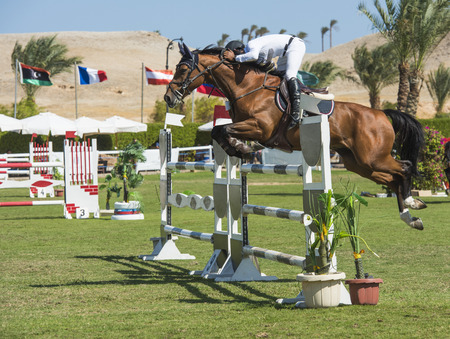 SAHL HASHEESH, EGYPT - OCTOBER 29TH 2016:  Arab Championship Showjumping World Cup Qualifiers on October 29th 2016 in Sahl Hasheesh, Egypt. Riders and horses in action during the main Grand Prix event. Editorial
