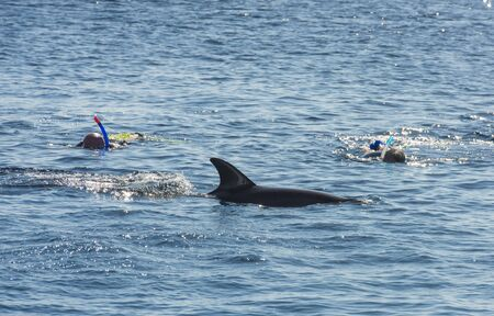 bottlenose: Person snorkeling with bottlenose dolphin in tropical ocean