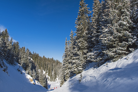 Panoramic view down snow covered valley in alpine mountain ski slope with coniferous pine trees