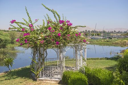 Steel metal pagoda pavilion in formal rural garden setting on flooded river bank and with flowering bougainvillea plant Imagens